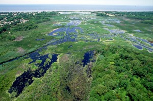 Wetlands - Cape May, New Jersey